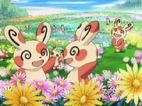 Lots of Spinda! Beyond the Mountain in Search of Happiness!