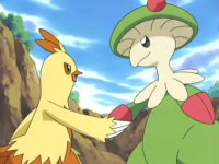 The Forest's Fighting King! Combusken VS Breloom!
