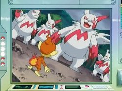 how to catch zangoose pokemon y
