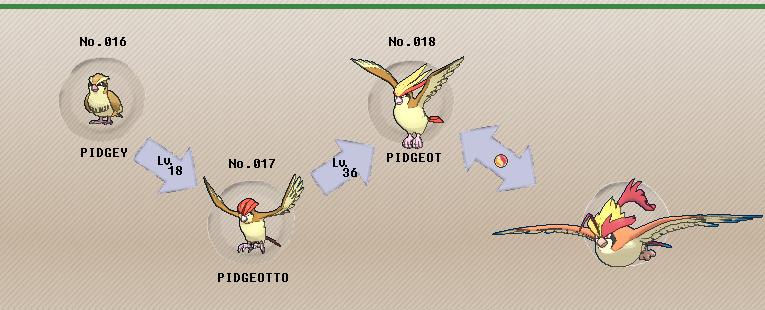 Pok 233 Mon Of The Week Pidgeot