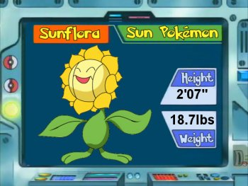 Best Nature For Sunflora